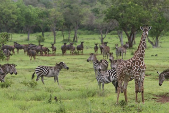 Tanzania invites bids for power project on Selous game reserve