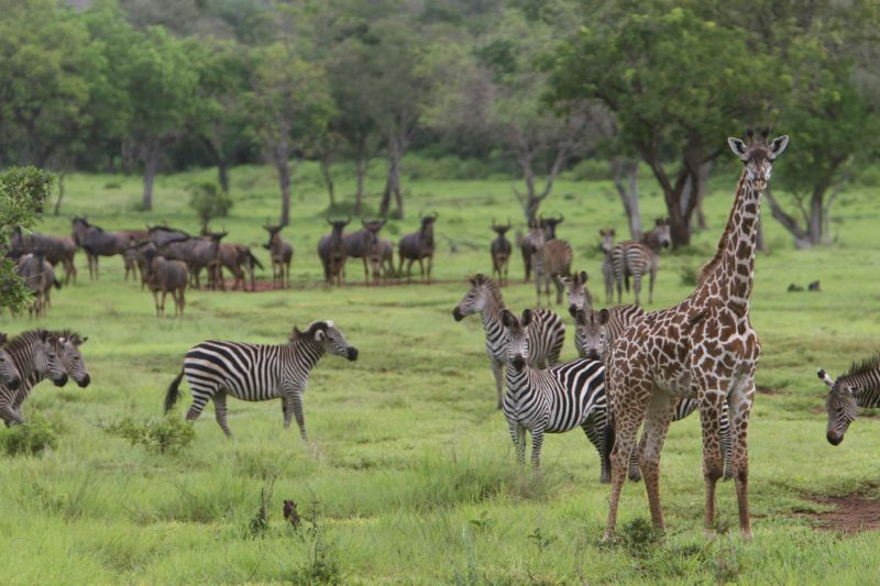 Tanzania invites bids for power project on Selous game reserve - CCE