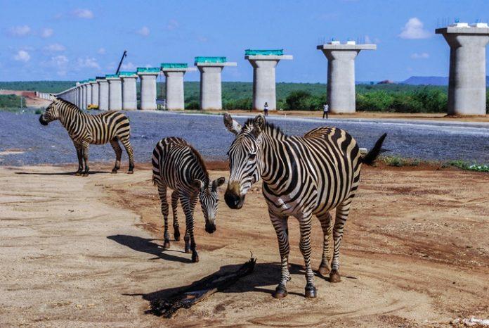 Conservationists in Kenya oppose SGR construction on animals Park