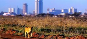 Chinese contractor says SGR project will not affect wildlife